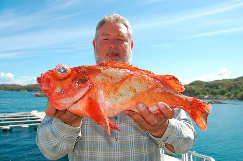 Рыба морской окунь: как поймать и как приготовить?