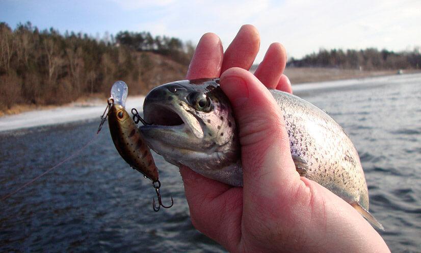 Какую рыбу можно поймать на Алтае?
