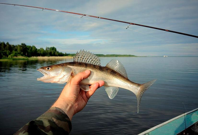 ОсобОсобенности рыбалки в Ленинградской области и Карелииенности рыбалки в Ленинградской области и Карелии