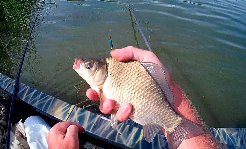 Рыбалка на карася весной: особенности. выбор снасти, отзывы