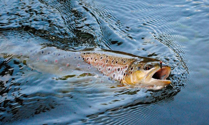 Какую рыбу можно поймать?