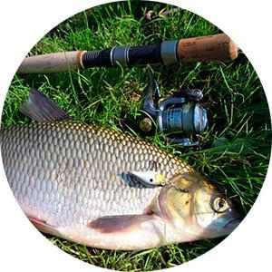 Какую рыбу ловить на пшено?
