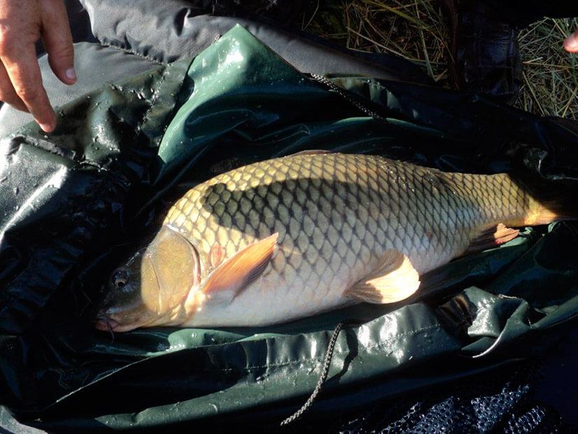 Отзывы о рыбалке в Самарской области