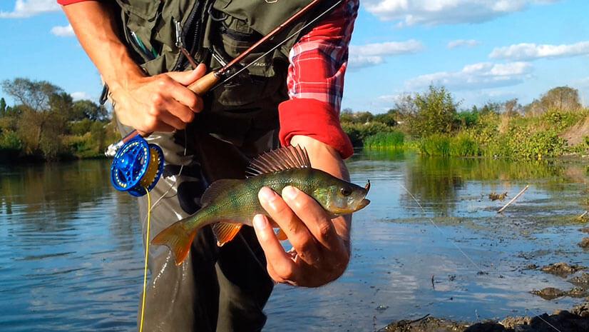 Особенности рыбалки на реке Дон: лучшие места, снасти, приманки