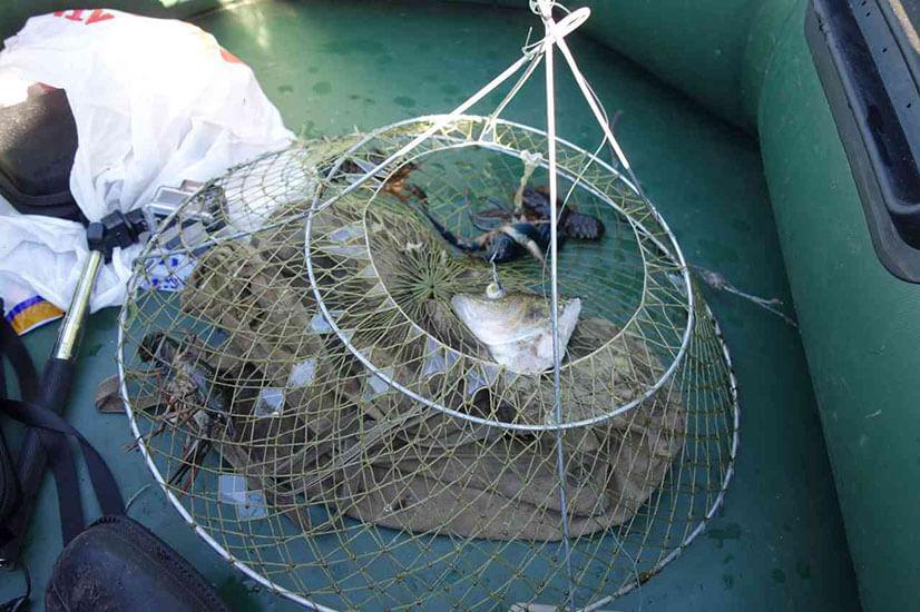 Приманки для ловли раков