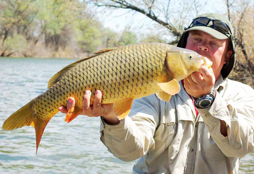 Советы по рыбалке на карпа: где, когда и на что ловить?