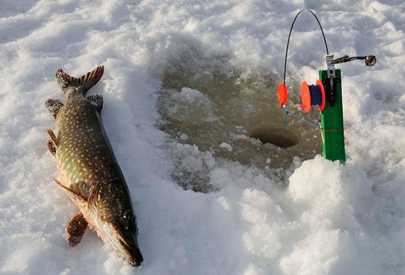 Зимняя рыбалка на щуку на жерлицы