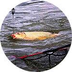 Рыбаловные снасти для ловли карпа