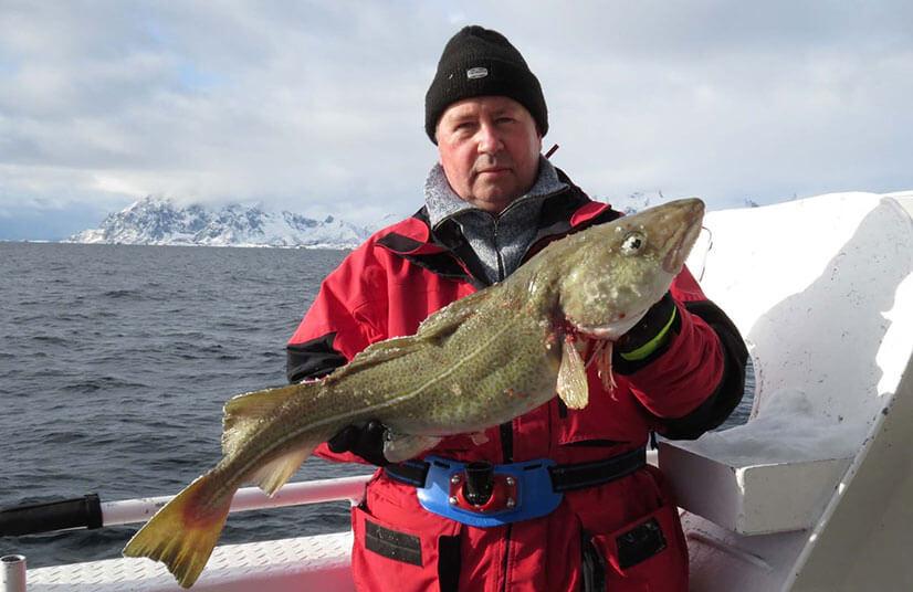 Треска красная: рыбалка на нее и рецепты вкусных блюд