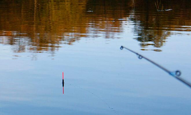 Сколько нужно удочек для рыбалки?