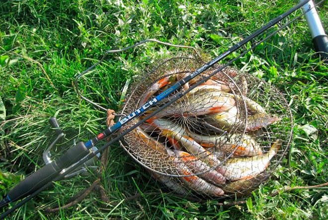 Пойманная рыба на Спиннинг Айко Буч