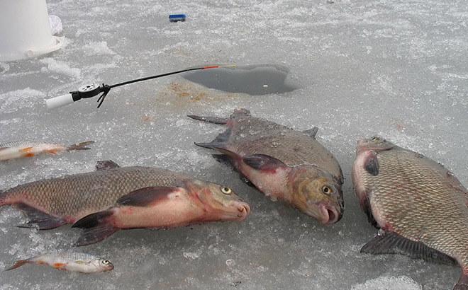 Где и когда ловить леща на течении зимой?