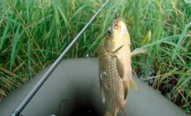 Особенности поведения рыбы в разные месяцы